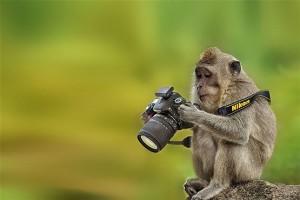 میمون در حال تنظیم دوربین