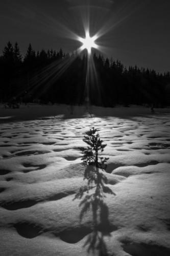 در حال رشد در برف