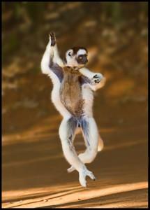 رقص میمون