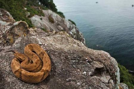 جزیره مارها