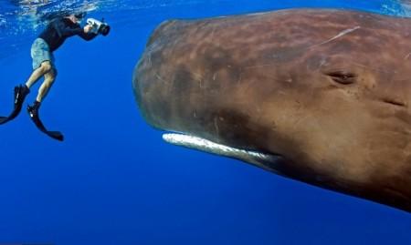 نهنگ عنبر