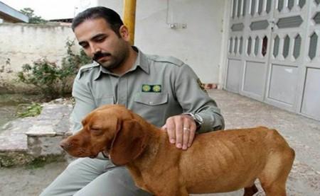 سگ ازاری